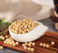 非转基因大豆 有机大豆 阳光嘉里  厂家直销价格合理