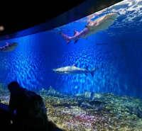 亚克力鱼缸 承接亚克力鱼缸工程 江苏亚克力鱼缸厂家