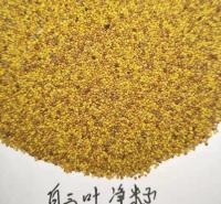 白车轴草 生长期达6年 山东花卉 白三叶种子供应