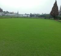 成都百慕大草坪厂家 成都百慕大草坪供应草皮批发 草坪基地