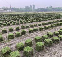四川混播草坪厂家 富榛花卉草坪基地 四川混播草坪厂家供应