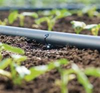 农作物灌溉用贴片滴灌带  壁厚度0.2mm 金海雨