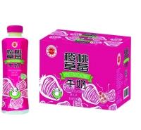 金登河樱桃草莓牛奶500ml厂家直发,质优价廉,口感纯正