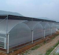 花卉种植培育   蔬菜大棚建设