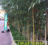 1公分绿化竹子价格 庭院工程绿化毛竹苗 2公分3公分早园竹价格