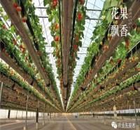 空中草莓种植系统  草莓栽培高架生产 草莓高架栽培报价低