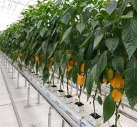 期待来电洽谈荷兰模式种植系统造价    无土栽培技术 效果好