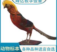 峰达厂家专业加工  动物标本 仿真标本  教学标本 支持定制  量大从优   需要联系冯经理