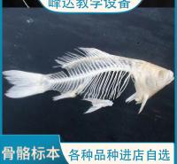 峰达厂家 专业加工 动物骨骼标本 生物学标本 猪骨骼标本 支持定制   量大从优 需要联系联系冯经理