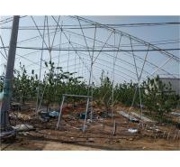 山东温室钢材日光温室价格 日光温室建设价格
