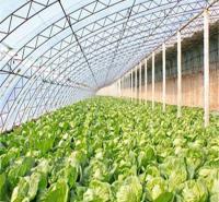 钢材日光温室价格 日光温室大棚价格