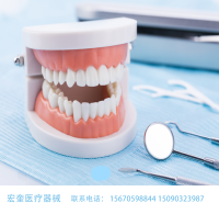 宏奎医疗 牙科器械牙模型  口腔保健护理牙模假牙口腔教学 保健护理牙齿模型 小牙模 口腔用品 幼儿园刷牙教学模型 牙科材料