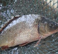 内蒙古-锡盟-正镶白旗-鲶鱼-池塘养殖