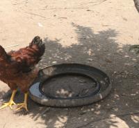 乌兰察布市-卓资县-草鸡-散养-绿色养殖