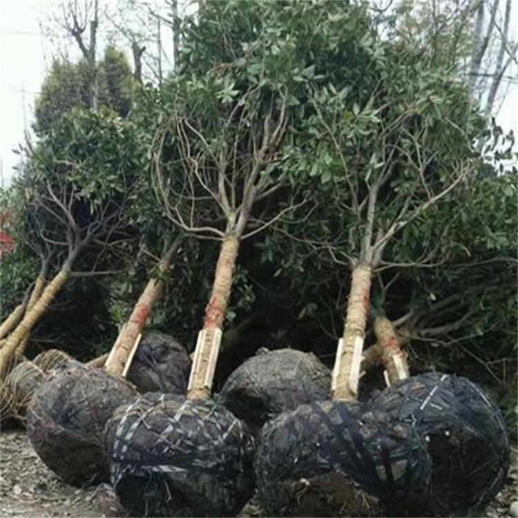 苍溪县龙山园林生态绿化有限责任公司