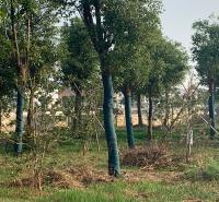 包树布 鑫贸 防尘盖土裹树布 保湿保温缠树布