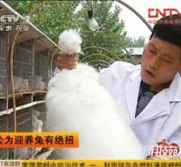 央视展播长毛兔养殖技术  兔苗养殖 肉兔养殖