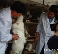 长毛兔价格  长毛兔种兔批发  獭兔养殖