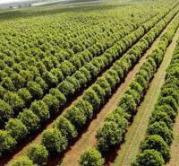优质坚果油价格优惠 澳洲坚果油批发零售