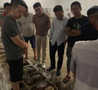 羊肚菌种植技术专家授课 包学包会可重复学习提供营养包制作方法