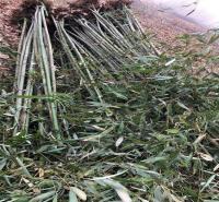 竹子的价格 竹子基地 山东竹子 竹子销售 各种竹子 园韵园林
