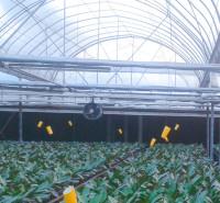 海南海口蔬菜薄膜温室建设 蔬菜大棚建造 连栋薄膜温室厂家