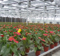 智能玻璃温室  无土栽培温室大棚  整齐美观 强度高 骨架合理抗风抗压