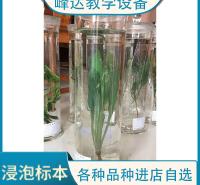 峰达厂家专业加工 专业加工标本 浸渍标本 中草药植物浸泡标本 园林花卉教学标本  需要联系联系冯经理