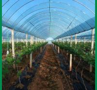 凯利丰蔬菜大棚膜 蔬菜大棚膜生产商 量大价优