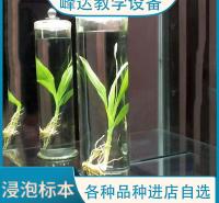 峰达厂家专业加工   浸制标本 植物标本  植物浸渍标本 教学标本 可以现场加工标本 需要联系