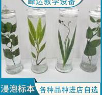 峰达厂家专业加工 浸制标本 植物浸制标本  中药浸制标本   量大从优  可以现场加工标本