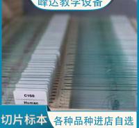 峰达厂家专业  教学切片 生物切片  峰达老店专业制作标本 可以现场加工标本   量大从优 需要联系