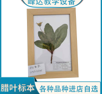 峰达厂家专业加工  腊叶标本 植物蜡叶标本 峰达老店专业加工各种标本 需要联系  可以现场制作