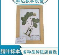 峰达厂家  植物蜡叶 蜡叶标本 实木框花草标本 保色腊叶标本 花植物标本专业加工多年