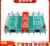 畜源养殖 全复合双体母猪产床 母猪产床保育两用设备 母猪分娩床