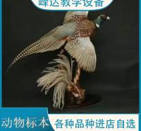 峰达公司  专业加工标本 动物标本 示教标本 动物标本制作 陈列标本 可以现场定