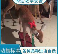 峰达公司  专业加工标本 动物标本 动物骨骼标本 生物学标本 陈列标本 厂家直供