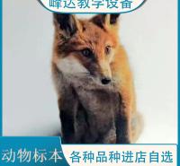 峰达厂家 专业加工标本 动物标本 示教标本 科普动物标本 陈列标本 厂家直供