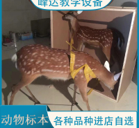 峰达公司 专业加工标本 动物标本 示教标本 科普动物标本 昆虫标本 欢迎联系