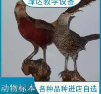 峰达老店 专业加工标本 动物标本 拟态动物标本 动物标本制作 陈列标本 支持定制