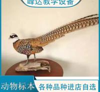 峰达公司  专业加工标本 动物标本 示教标本 科普动物标本 昆虫标本 厂家直供