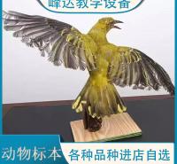 峰达厂家 专业加工标本 动物标本 动物骨骼标本 动物标本制作 陈列标本 量大优惠